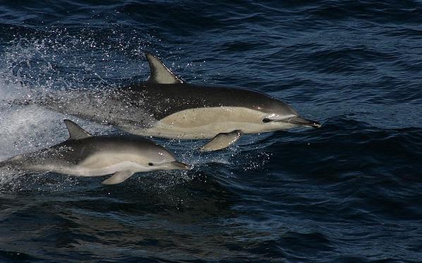 Кто такие дельфины