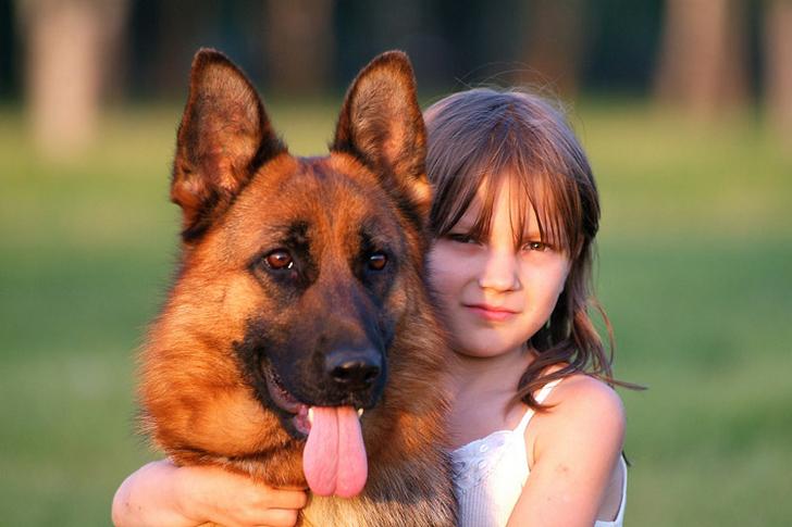 Лучший друг человека - немецкая овчарка