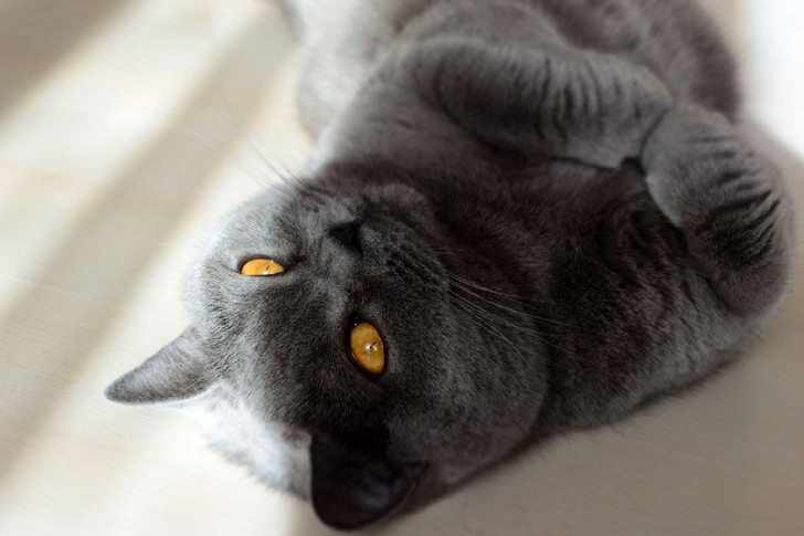 Сколько усов у кошек - красивые усы