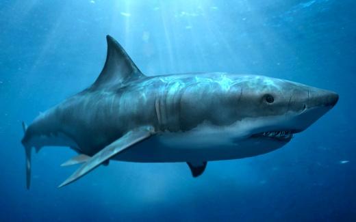 Сколько живут Акулы - подробная информация