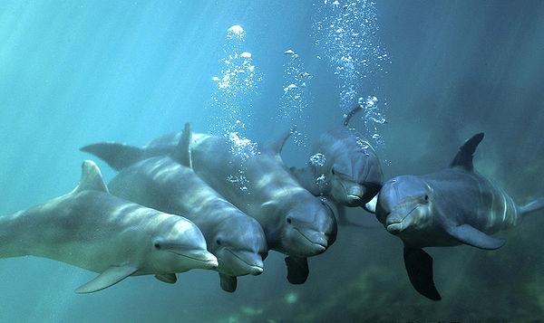 Сколько живут дельфины