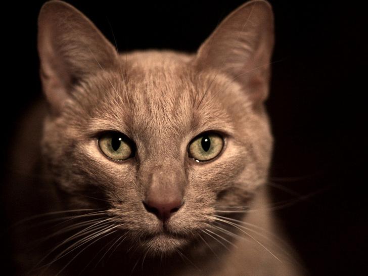 Вибриссы у котов и кошек