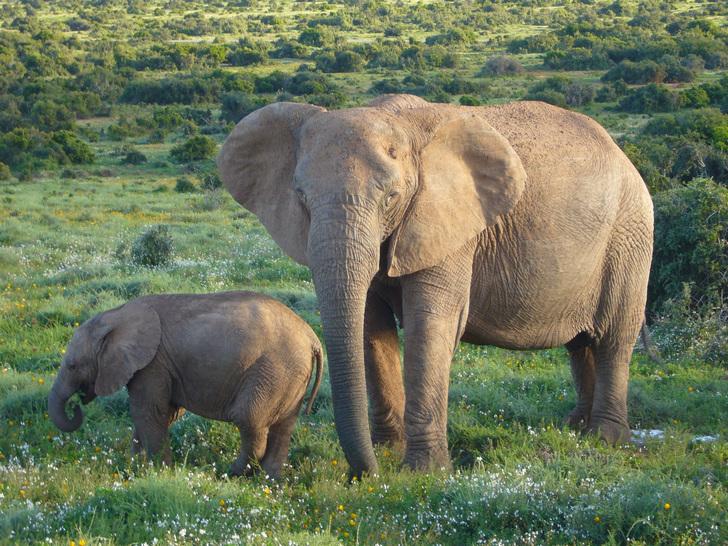 Сколько весит слоненок? Ответ в статье.