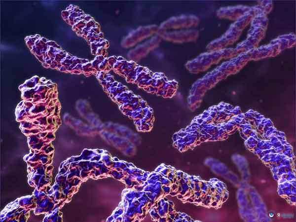Генетики окрашивали хромосомы