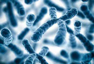 Как проходило изучение ДНК обезьян?