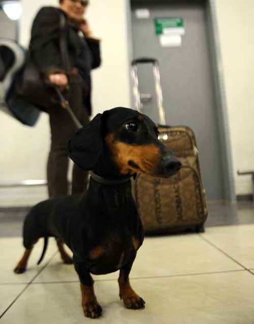 За сколько нужно приезжать в аэропорт, если с вами едут животные
